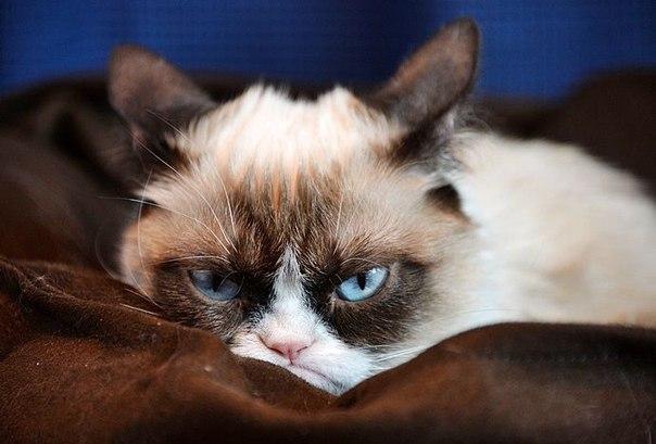 Картинки по запросу унылый кот