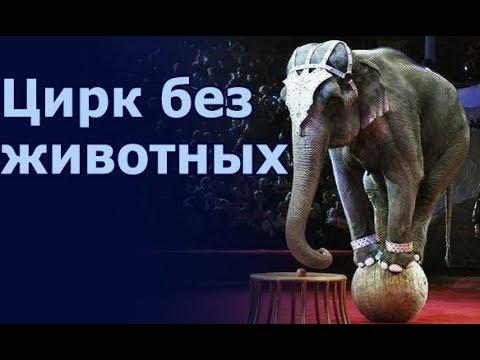 В Киеве запретили работу цирков с животными