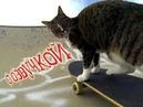 Приколы с котами – Смешная озвучка животных – Это полный угар! Попробуй не засмеяться - PSO