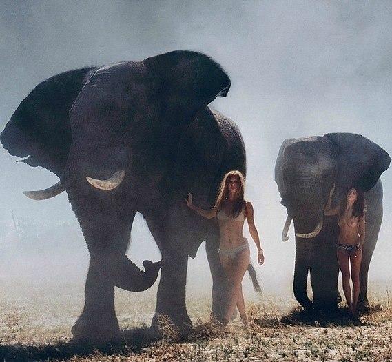 Elephant shag women — img 10