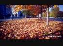100 осенняя аллея в Слуцке. Как она выглядит
