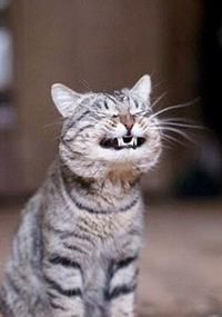 Кошачый член