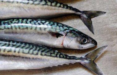 Фото рецепт засола скумбрии в рассоле Приготовленная по этому рецепту скумбрия получается нежной, чуточку солоноватой и прямо тает во рту. А самая хорошая новость для любителей полакомиться вкусной соленой рыбкой заключается в том, что рецепт засолки скумбрии очень простой и быстрый – если уделить немного времени приготовлению, к примеру, под вечер, то уже на следующее утро рыба будет готова к употреблению.