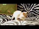 Осторожно ! мимими ( котята )