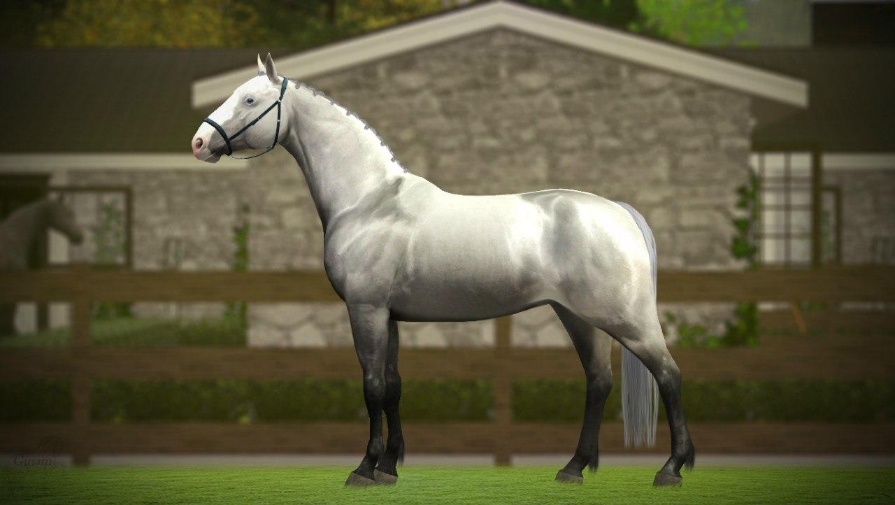 Регистрация лошадей в RHF 1.2 - Страница 6 BFRGFL_3GL0