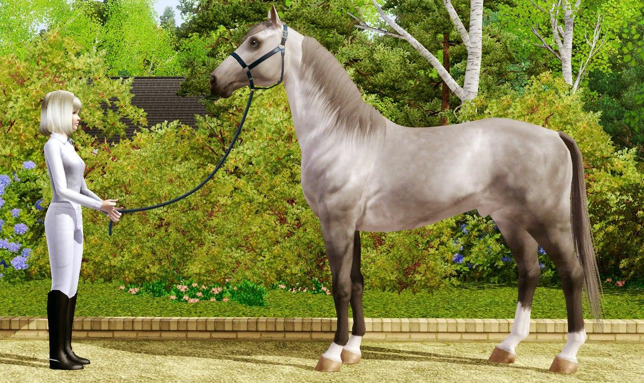 Регистрация лошадей в RHF 1.1 KZQDP99S5vE
