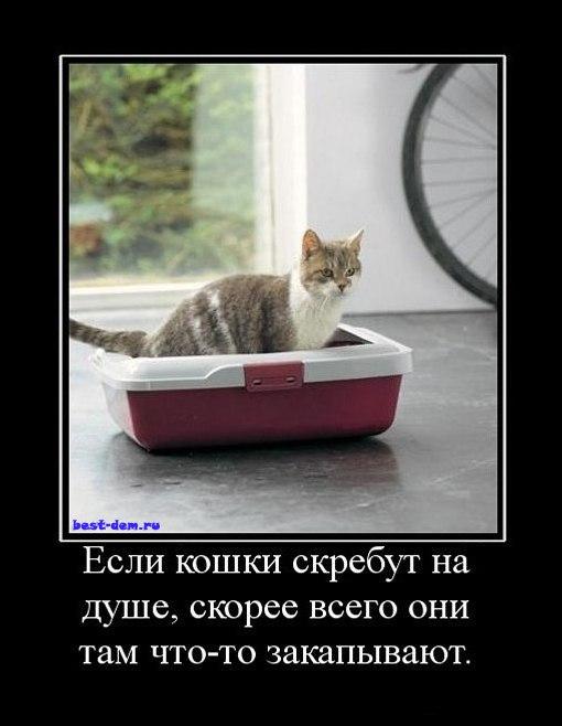 Светлана-Юрьевна Маслакова | Москва