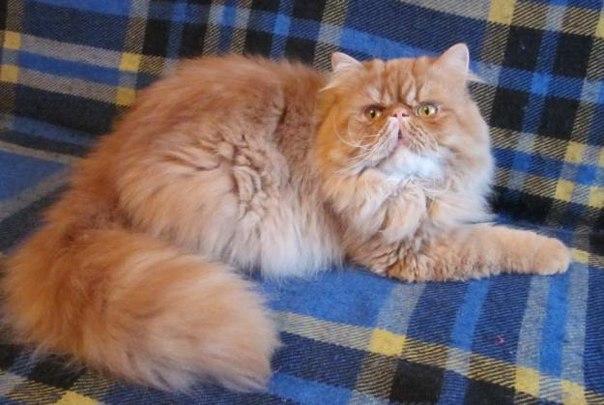 Нэнси кошка
