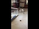 Как выглядит побег с тюрьмы у этой собаки