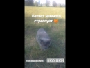 Прогулка с котом на Острове Татышев