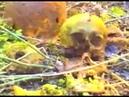 Долина смерти Эхо войны Число охотника