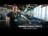 Мышцы спины (Урок 7). Александр Эскин