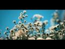 BULDOZERKINO WEDDING PREMIUM © IN MY MIND формат видео для ВКонтакте