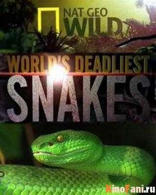 Самые опасные змеи в мире смотреть