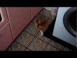 Котёнок по имени Тапчик и Губка Боб