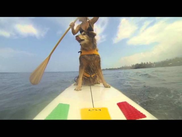 Keely Surf Dog- Stand Up Paddleboarding in Hawaii-SUP