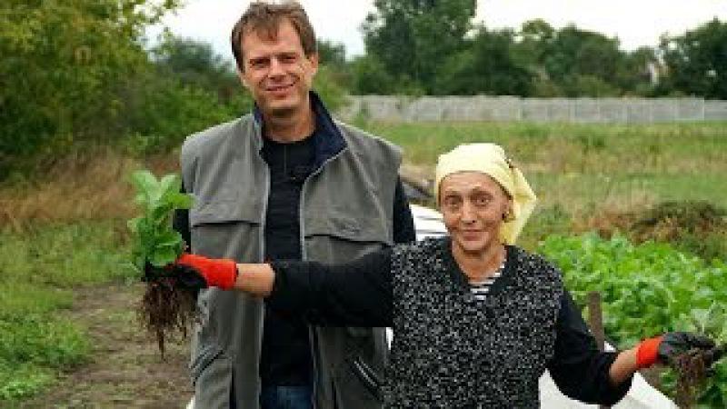 Посадка клубники осенью Секретный ингредиент для шикарного урожая