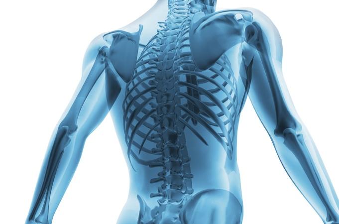 8. Опорно двигательная система - скелет (8 класс) - биология, подготовка к ЕГЭ и ОГЭ 8. jgjhyj ldbufntkmyfz cbcntvf - crtktn (8