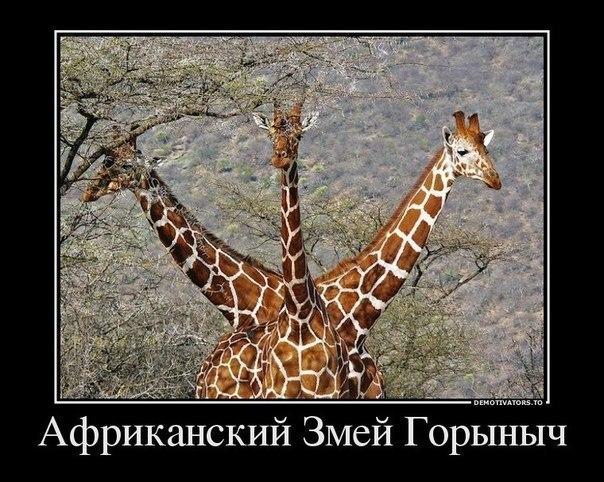 Приколы ВКонтакте...