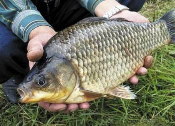 Прикормка для карася рыбалка