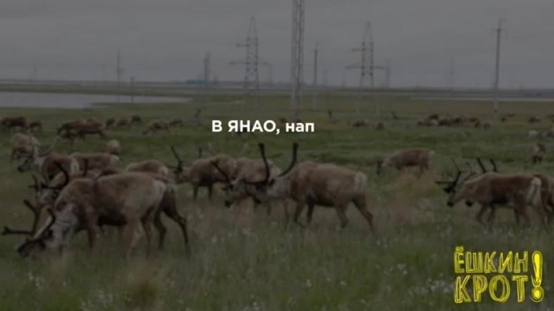 «Газпром» — национальное достояние_.mp4