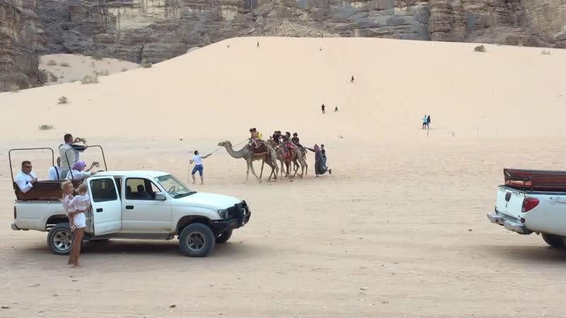 Wadi Rum. Пытка детей верблюдами