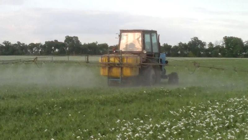 Посев гороха на зерно. Травим жука на горохе. Інсектицид енжіо