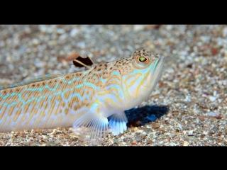 5 опасных животных Чёрного моря