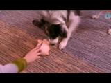 Собака которая любит деньги. Бордер-колли Финик и Ольга Змеевская. 19.08.2017г.