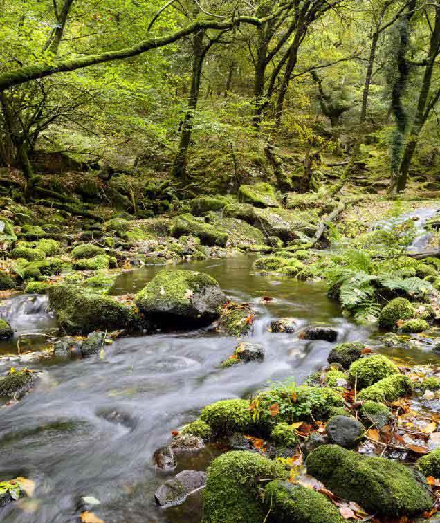 Генераторы шума часто воспроизводят успокаивающие звуки от природы, такие как звук бегущего потока.