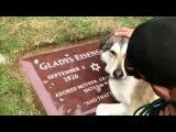 Собачка плачет на могиле хозяина Not Vine