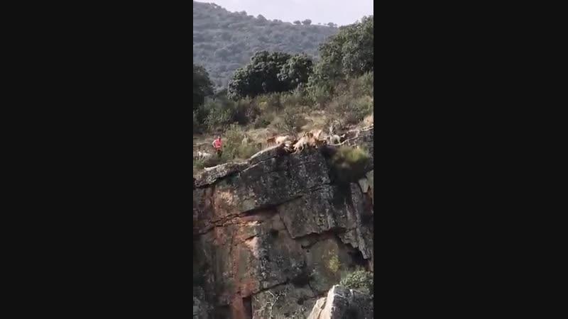 Псы напали на Морала PAN CAUCASUS