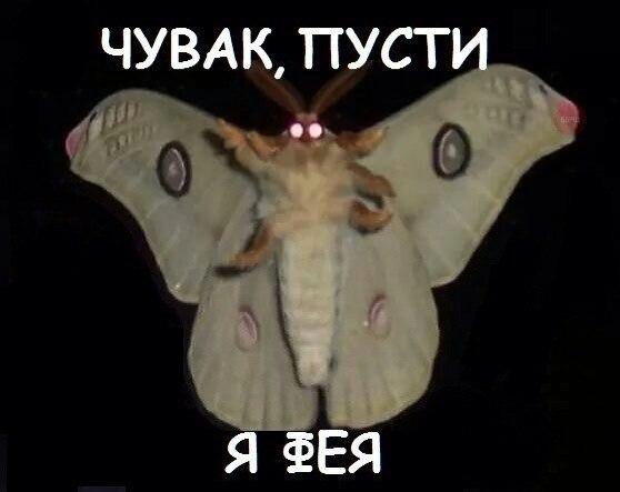 https://pp.vk.me/c7008/v7008255/1db5c/rGjjrlxlm2I.jpg
