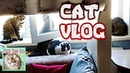 Cat Vlogs. Baby petting a cat. Cats and vacuum cleaner. Cat licks packages.