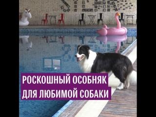 Роскошный особняк для любимой собаки
