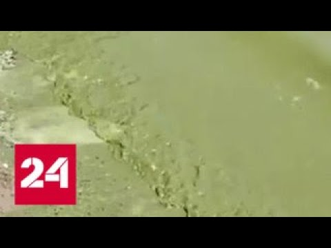 Экологи встревожены рекордным цветением водорослей в Финском заливе - Россия 24