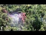 Пауки вьют паутину в кустах