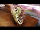 Гигантские стромбусы моллюски клэм - Окинава Япония