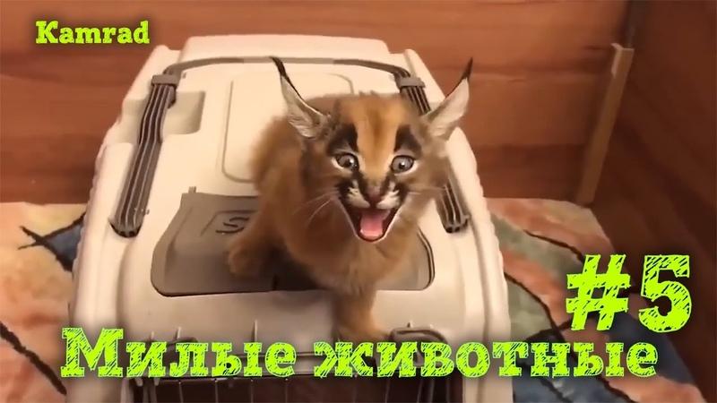 Приколы с котами и собаками, Лучшая подборка приколов с смешными животными! 5