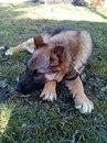 Мой милый и красивый собакин. Зовут Рекс.