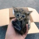 Котенка подселили в семейку хорьков, которые приняли его как своего