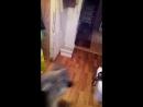 Вео рэкс кот кузя в первый раз приехали к нам на передержку