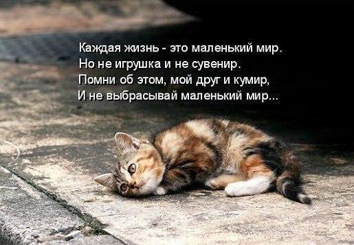 Юлия Петрова | Кострома