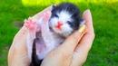 КОТЕНОК потерялся! Спасаем котенка Кошка родила котят у нас в саду! Наши кошки и котыСмешные кошки