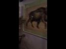 Video-f0a8b0ab4f1b692a6db80f2216a1e083-