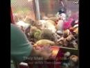 Viral TRND Cat Takes Nap in Claw Machine at Arcade