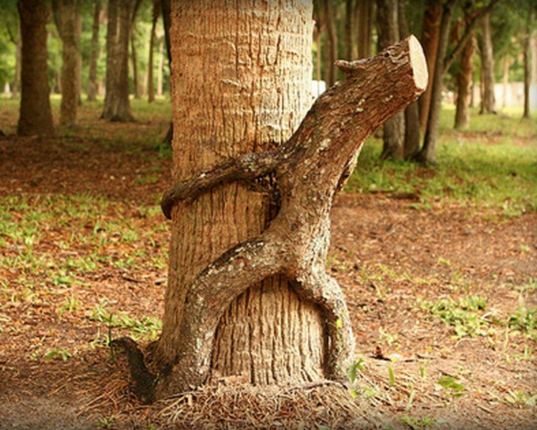 Петуха, прикольные картинки деревья