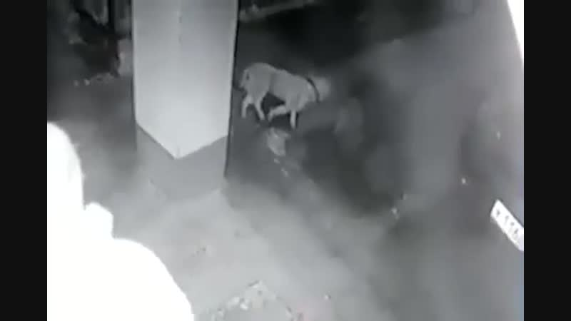 Сбросил собаку с 6го этажа