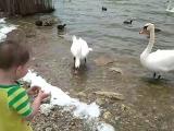 Феликс и Лебеди. Саки. Озеро. Крым 2018
