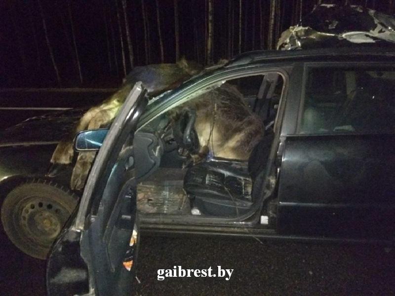 В Брестской области участились случаи наездов на диких животных. Что надо знать водителю?